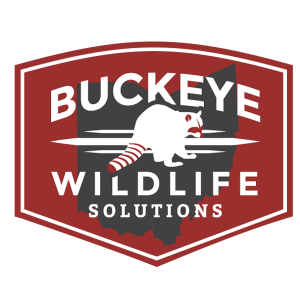 Attic Cleanout Logo by Buckeye Wildlife Solutions