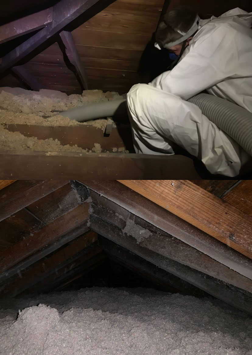 About Attic Cleanout Photo A division of buckeye wildlife solutions