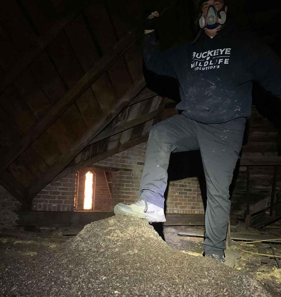 Piles of bat guano photo after bats gained entry into an attic